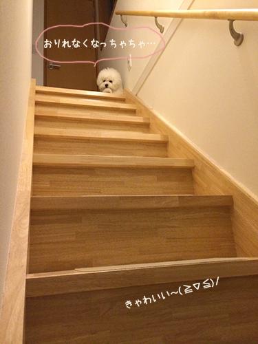 むくの助の階段