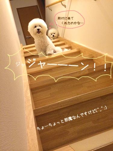 ふわ丸の階段
