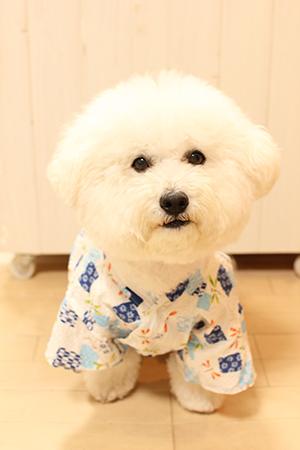 犬用浴衣ふわ丸正面