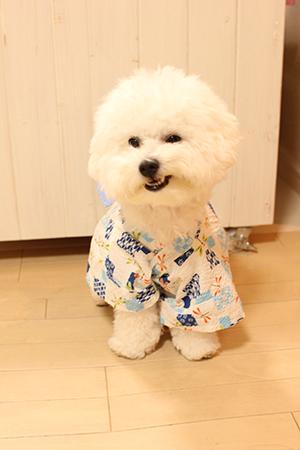 犬用浴衣むくの助正面